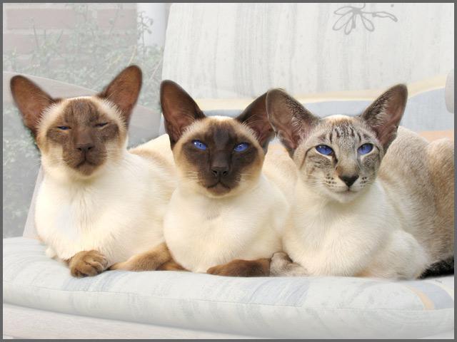 (Katten)verenigingen